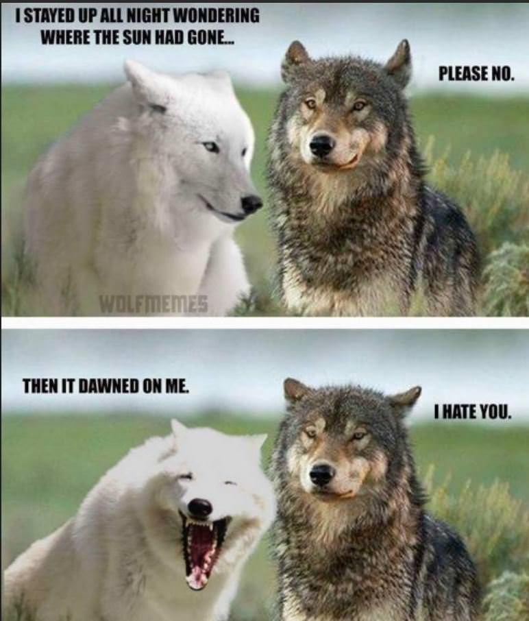 wolf meme